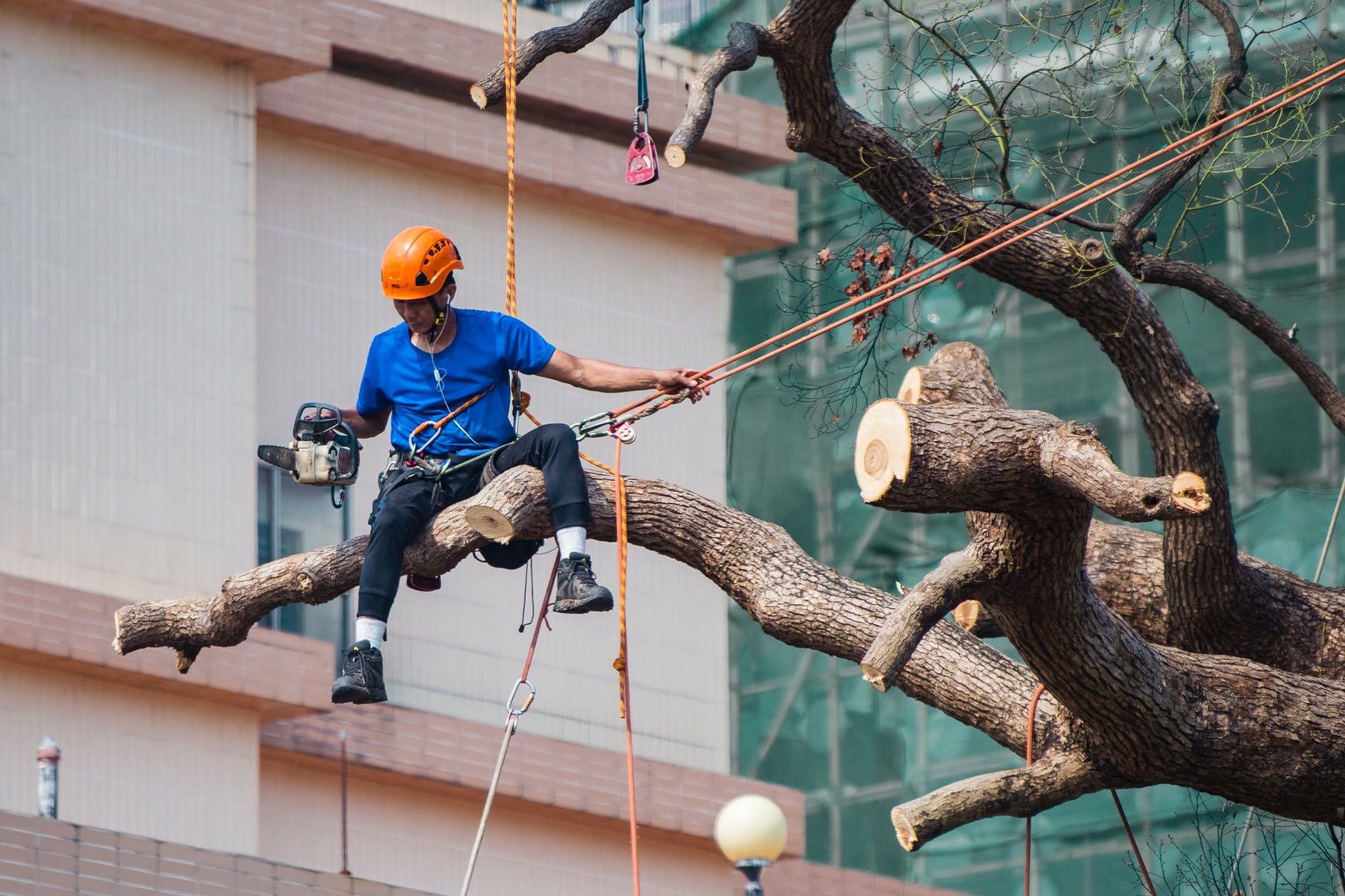 The top reasons to work with professional arborist services near you